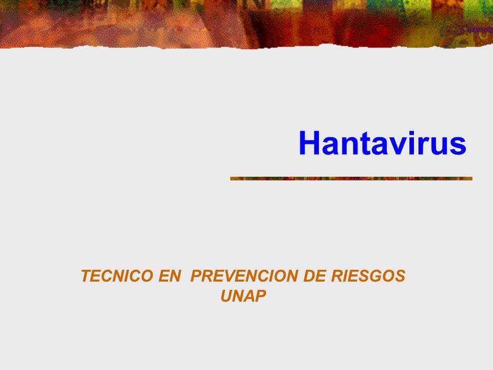 Hantavirus TECNICO EN PREVENCION DE RIESGOS UNAP