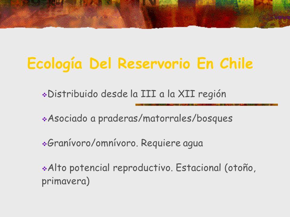 Ecología Del Reservorio En Chile Distribuido desde la III a la XII región Asociado a praderas/matorrales/bosques Granívoro/omnívoro. Requiere agua Alt
