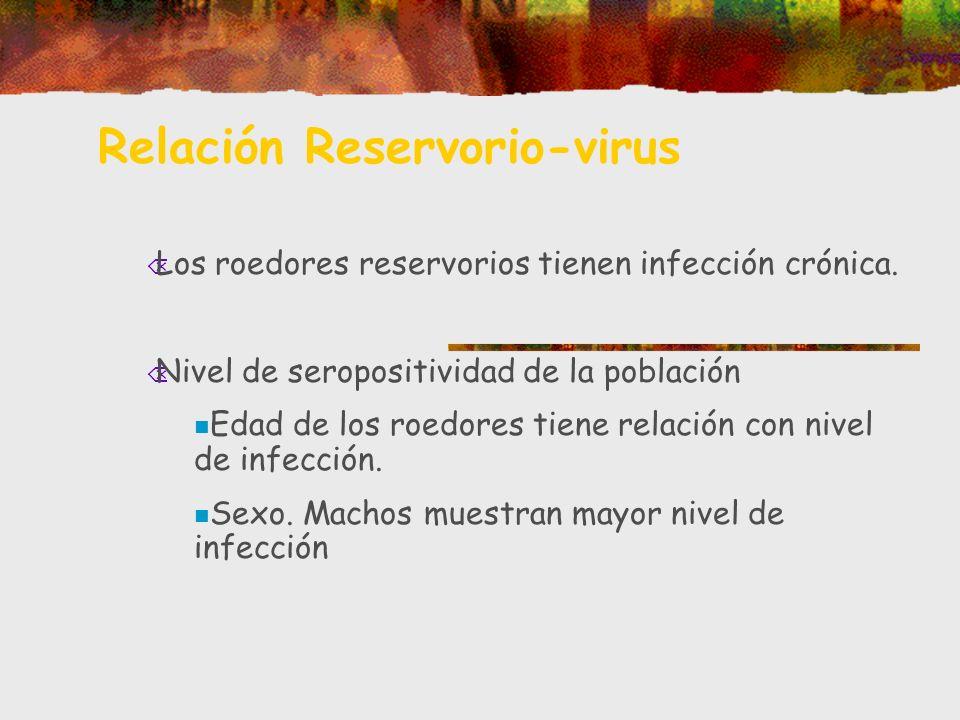 Relación Reservorio-virus Õ Los roedores reservorios tienen infección crónica. Õ Nivel de seropositividad de la población Edad de los roedores tiene r