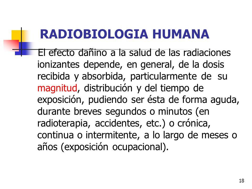 18 RADIOBIOLOGIA HUMANA El efecto dañino a la salud de las radiaciones ionizantes depende, en general, de la dosis recibida y absorbida, particularmen