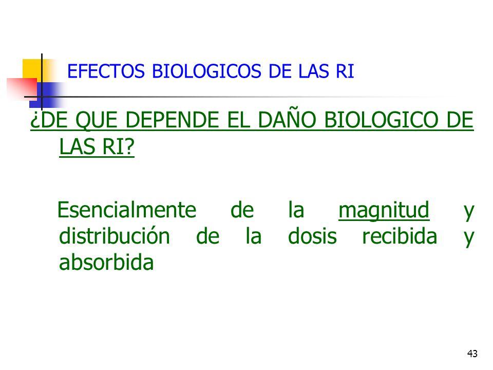 43 EFECTOS BIOLOGICOS DE LAS RI ¿DE QUE DEPENDE EL DAÑO BIOLOGICO DE LAS RI? Esencialmente de la magnitud y distribución de la dosis recibida y absorb