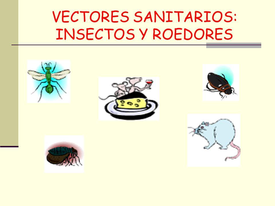 VECTORES SANITARIOS: INSECTOS Y ROEDORES
