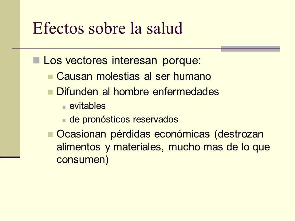 Efectos sobre la salud Los vectores interesan porque: Causan molestias al ser humano Difunden al hombre enfermedades evitables de pronósticos reservad