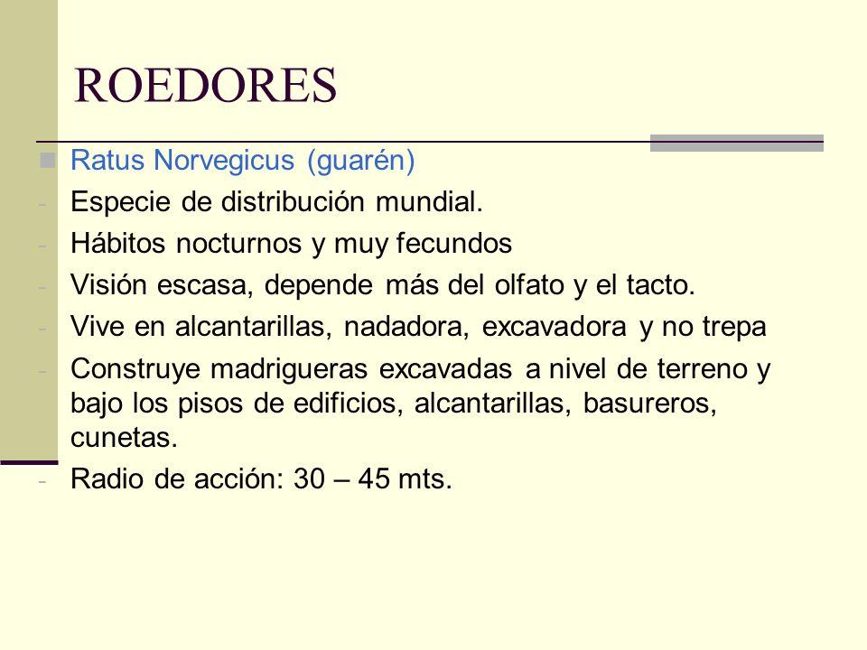 ROEDORES Ratus Norvegicus (guarén) - Especie de distribución mundial. - Hábitos nocturnos y muy fecundos - Visión escasa, depende más del olfato y el