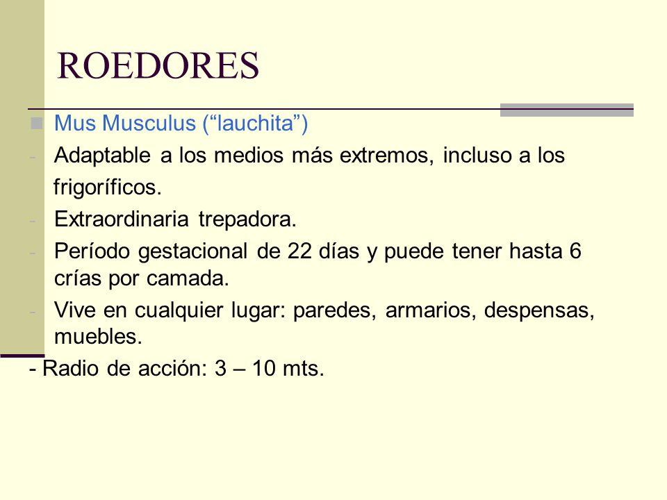 ROEDORES Mus Musculus (lauchita) - Adaptable a los medios más extremos, incluso a los frigoríficos. - Extraordinaria trepadora. - Período gestacional