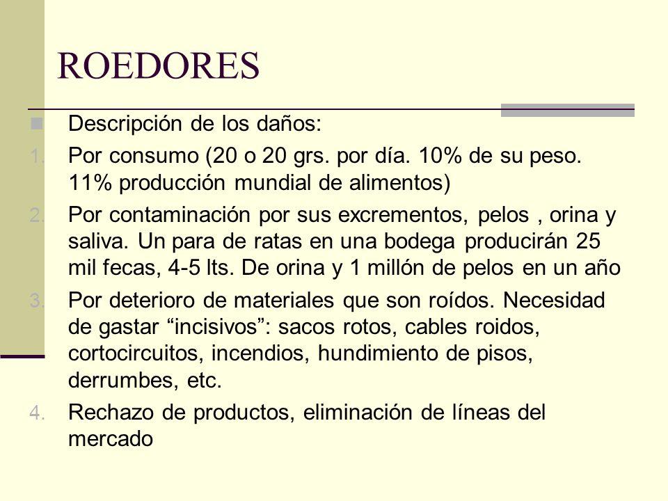 ROEDORES Descripción de los daños: 1. Por consumo (20 o 20 grs. por día. 10% de su peso. 11% producción mundial de alimentos) 2. Por contaminación por