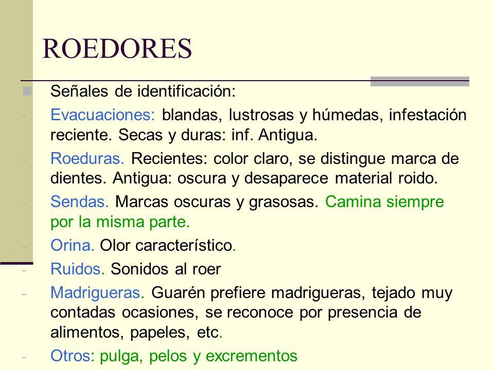 ROEDORES Señales de identificación: - Evacuaciones: blandas, lustrosas y húmedas, infestación reciente. Secas y duras: inf. Antigua. - Roeduras. Recie