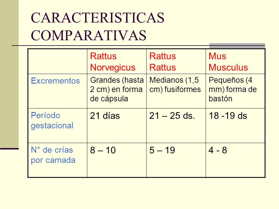 CARACTERISTICAS COMPARATIVAS Rattus NorvegicusRattus Mus Musculus Excrementos Grandes (hasta 2 cm) en forma de cápsula Medianos (1,5 cm) fusiformes Pe