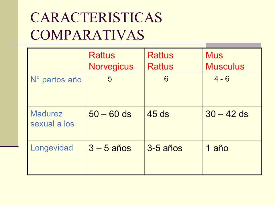 CARACTERISTICAS COMPARATIVAS Rattus NorvegicusRattus Mus Musculus N° partos año 5 6 4 - 6 Madurez sexual a los 50 – 60 ds45 ds30 – 42 ds Longevidad 3