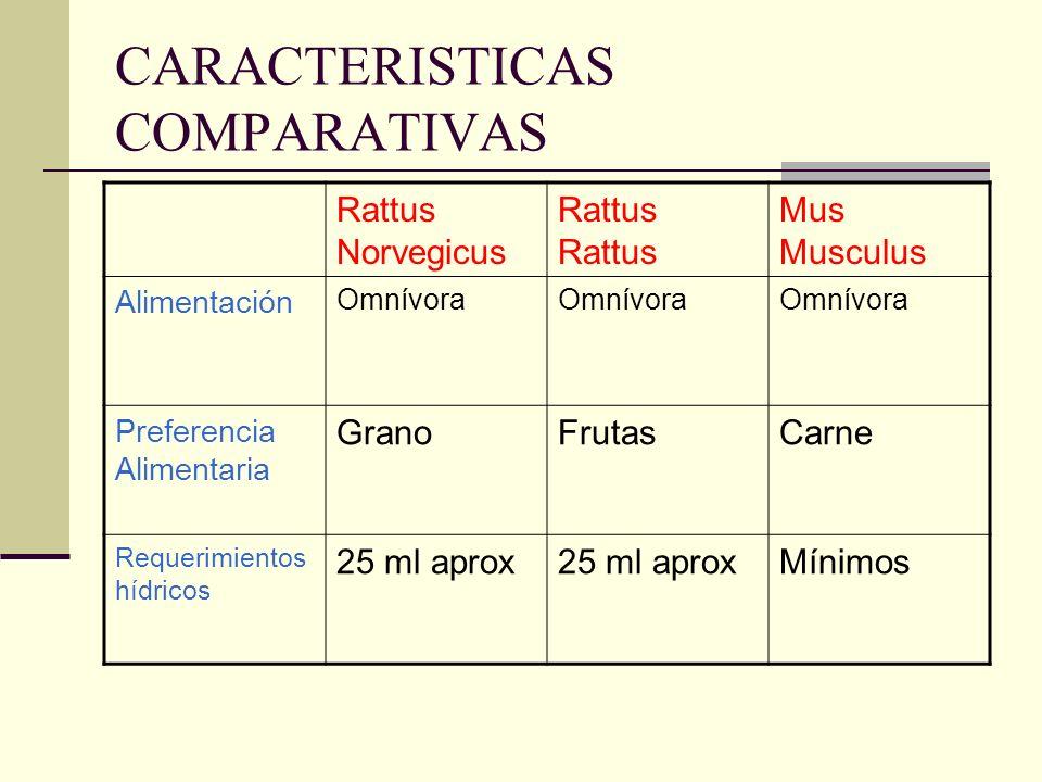 CARACTERISTICAS COMPARATIVAS Rattus NorvegicusRattus Mus Musculus Alimentación Omnívora Preferencia Alimentaria GranoFrutasCarne Requerimientos hídric