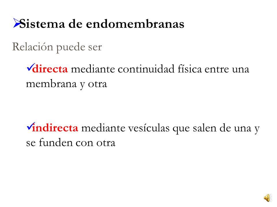 Sistema de endomembranas Relación puede ser directa mediante continuidad física entre una membrana y otra indirecta mediante vesículas que salen de una y se funden con otra