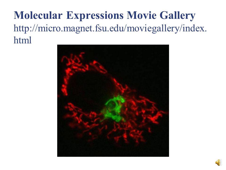 COMPONENTE CÉLULA ESTRUCTURAFUNCIÓN Peroxisomas Eucariotas Vesículas esféricas que contienen enzimas oxidativas Protección contra productos tóxicos del metabolismo del O2.