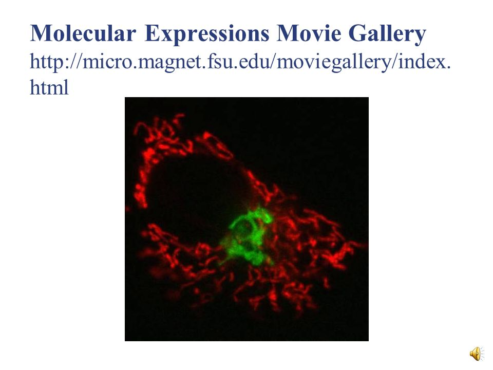 Molecular Expressions Movie Gallery http://micro.magnet.fsu.edu/moviegallery/index. html
