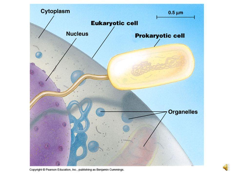 La célula es la unidad básica estructural y funcional de todos los seres vivos. Todos los organismos vivientes están compuestos de células. Todas las