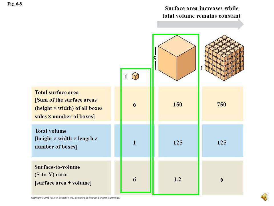 Límite mayor está impuesto por Difusión Razón Area de superficie a Volumen (A/V).