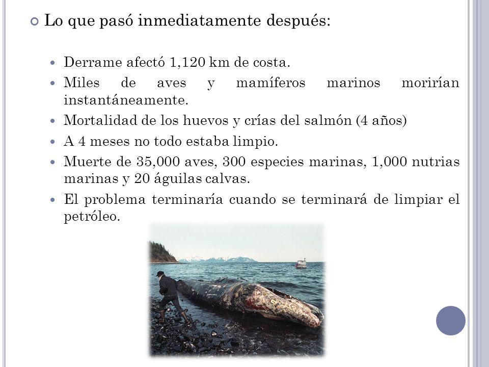 Lo que pasó inmediatamente después: Derrame afectó 1,120 km de costa. Miles de aves y mamíferos marinos morirían instantáneamente. Mortalidad de los h