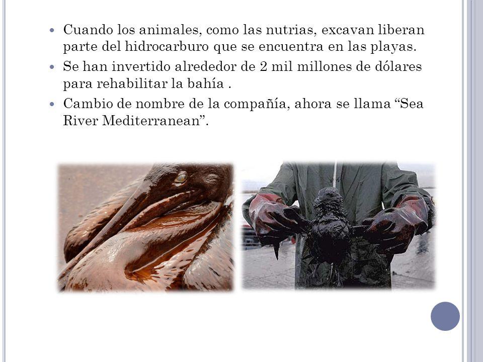 Cuando los animales, como las nutrias, excavan liberan parte del hidrocarburo que se encuentra en las playas. Se han invertido alrededor de 2 mil mill