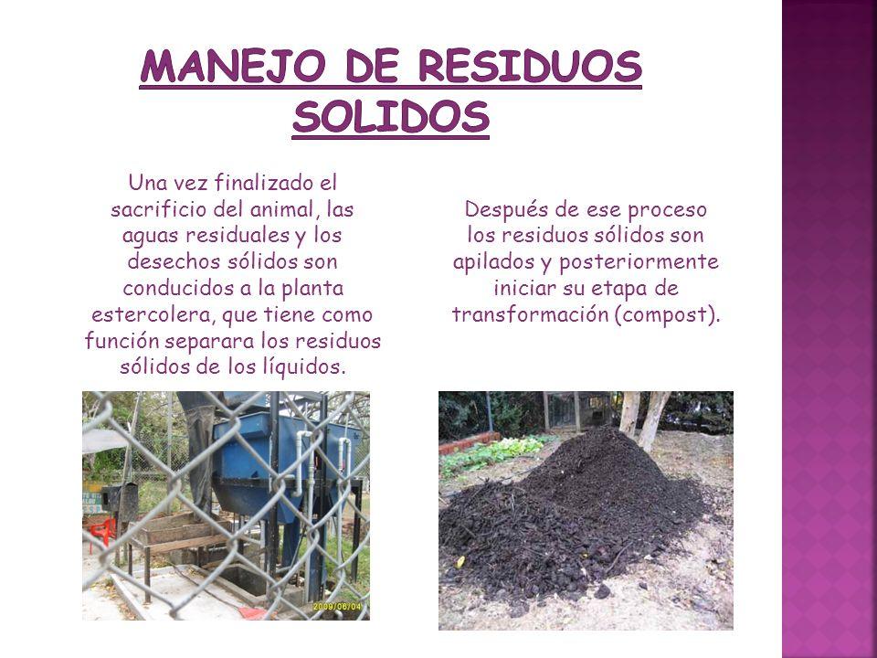 Después de ese proceso los residuos sólidos son apilados y posteriormente iniciar su etapa de transformación (compost). Una vez finalizado el sacrific