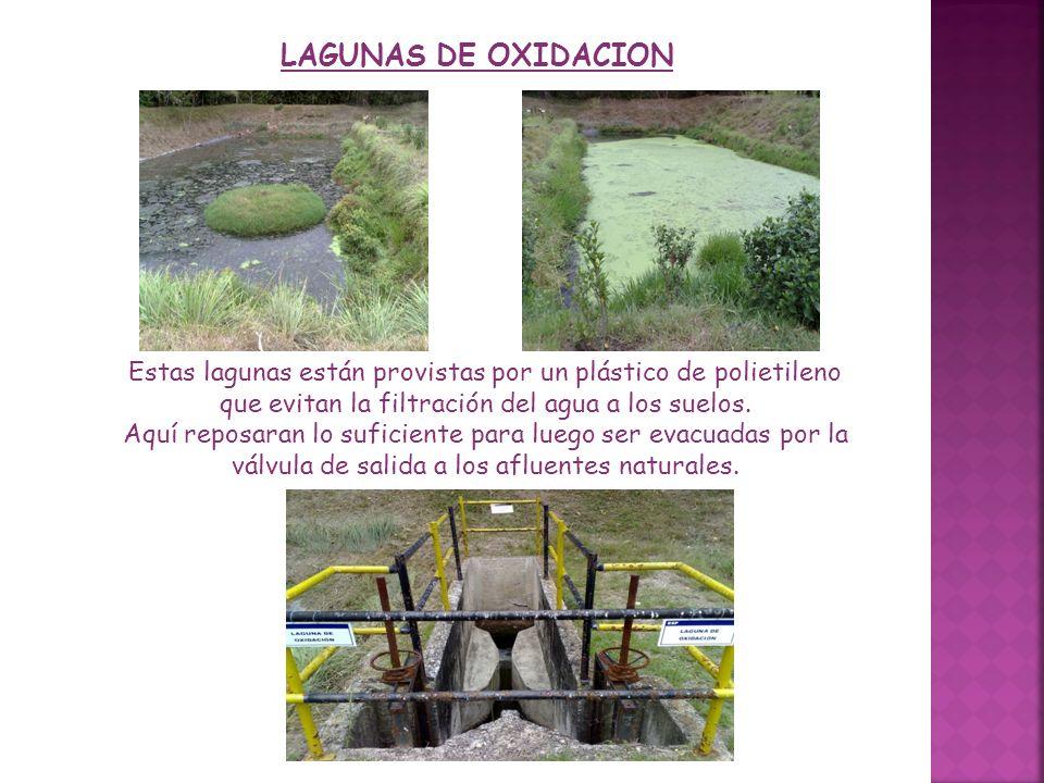 LAGUNAS DE OXIDACION Estas lagunas están provistas por un plástico de polietileno que evitan la filtración del agua a los suelos. Aquí reposaran lo su