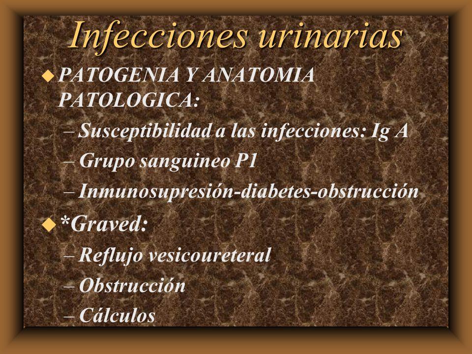 Infecciones urinarias u PATOGENIA Y ANATOMIA PATOLOGICA: –Susceptibilidad a las infecciones: Ig A –Grupo sanguineo P1 –Inmunosupresión-diabetes-obstru