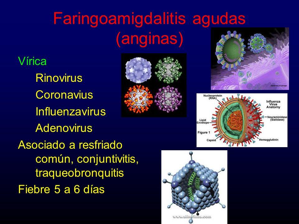Vírica Rinovirus Coronavius Influenzavirus Adenovirus Asociado a resfriado común, conjuntivitis, traqueobronquitis Fiebre 5 a 6 días Faringoamigdaliti