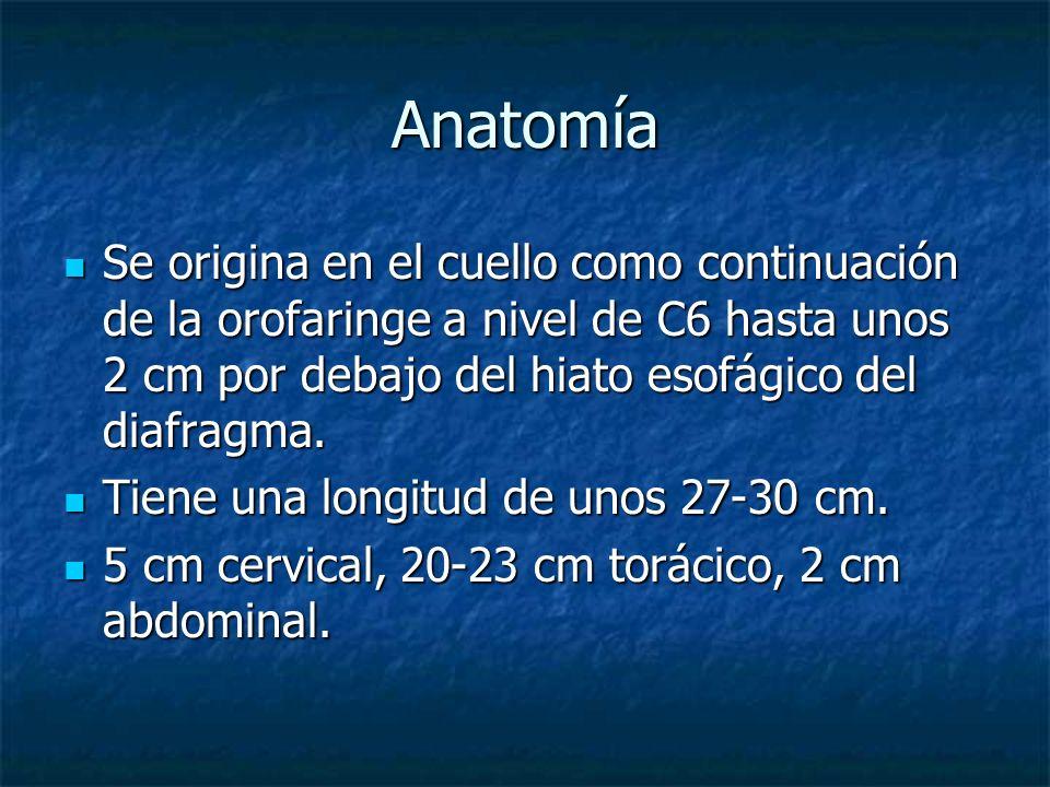 Anatomía Se origina en el cuello como continuación de la orofaringe a nivel de C6 hasta unos 2 cm por debajo del hiato esofágico del diafragma. Se ori