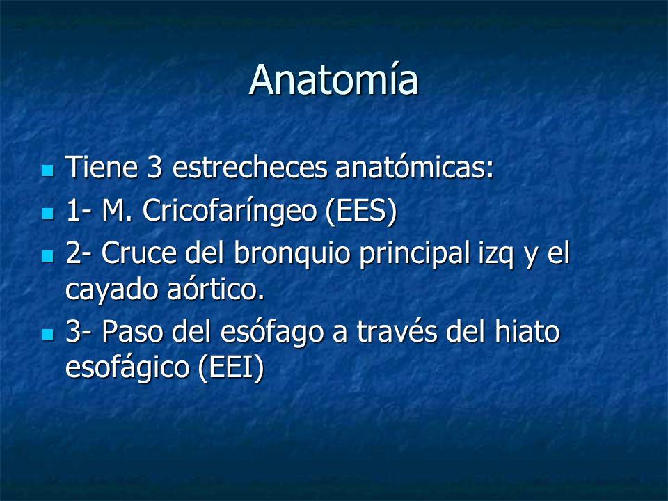 Anatomía Tiene 3 estrecheces anatómicas: Tiene 3 estrecheces anatómicas: 1- M. Cricofaríngeo (EES) 1- M. Cricofaríngeo (EES) 2- Cruce del bronquio pri