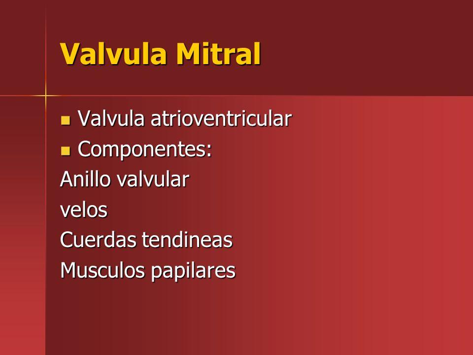 Valvula Mitral Valvula atrioventricular Valvula atrioventricular Componentes: Componentes: Anillo valvular velos Cuerdas tendineas Musculos papilares