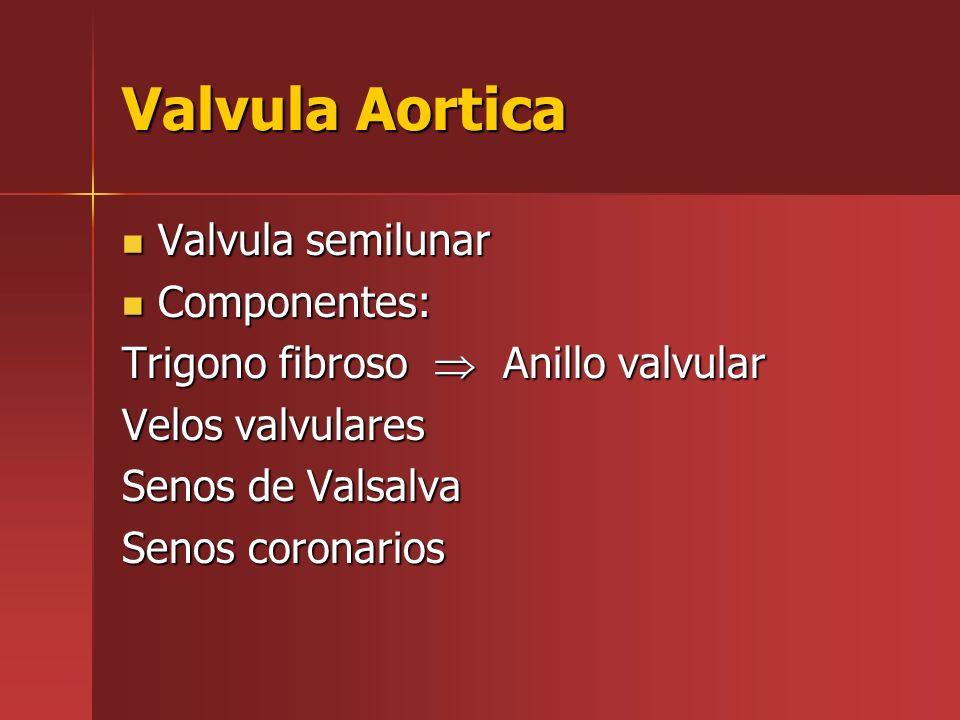 Valvula Aortica Valvula semilunar Valvula semilunar Componentes: Componentes: Trigono fibroso Anillo valvular Velos valvulares Senos de Valsalva Senos