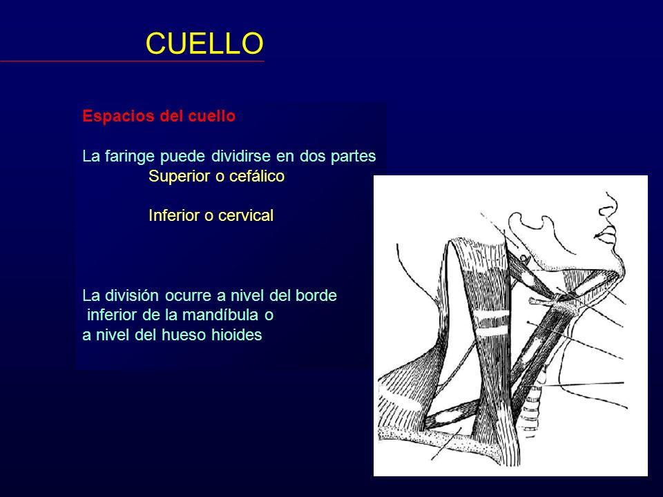 CUELLO Espacios del cuello Espacio Peri-faríngeo Un Retro-faríngeo Dos 2 Latero-faríngeo o maxilofaríngeo Diafragma estiloideo Pre-estiloideo Parotídeo Para-amigdalino Retro-estiloideo Carotídeo