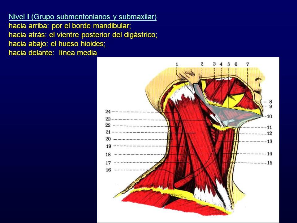 Nivel I (Grupo submentonianos y submaxilar) hacia arriba: por el borde mandibular; hacia atrás: el vientre posterior del digástrico; hacia abajo: el h