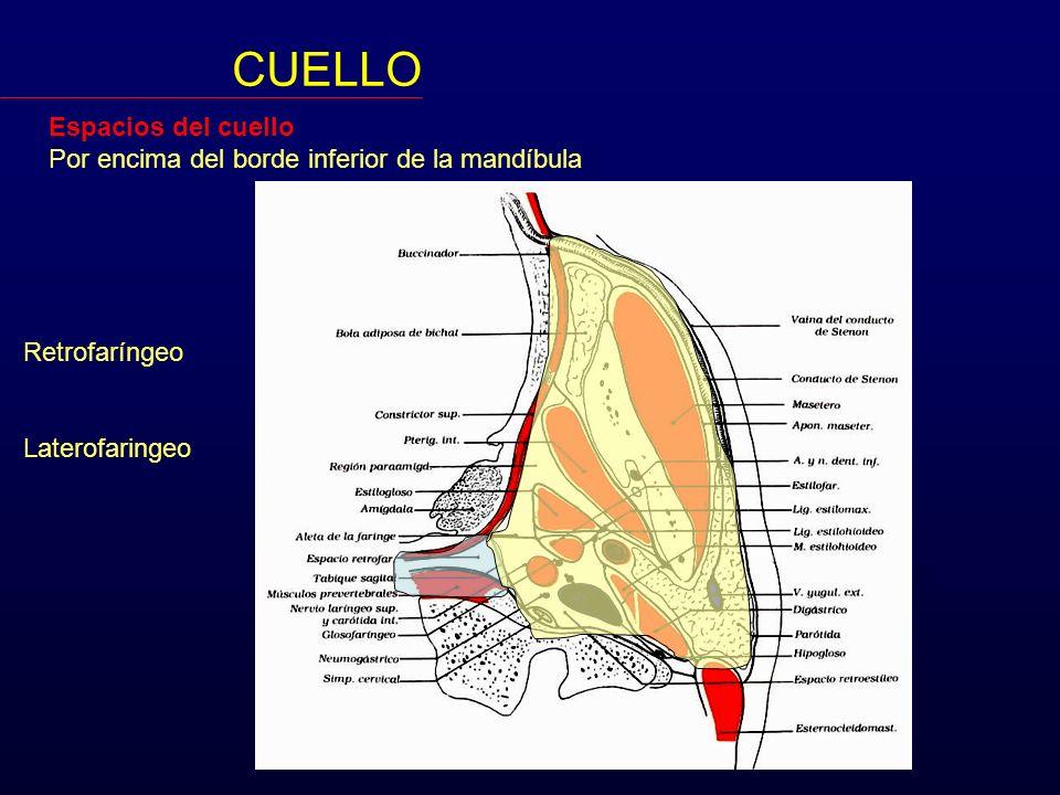 Espacios del cuello Por encima del borde inferior de la mandíbula CUELLO Laterofaringeo Pre-estiloideo Retro-estiloideo