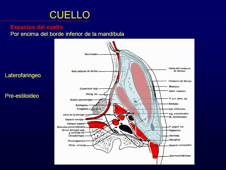 Espacios del cuello Por encima del borde inferior de la mandíbula CUELLO Laterofaringeo Pre-estiloideo -Para-amigdalino -Parotídeo Retro-estiloideo Carotídeo