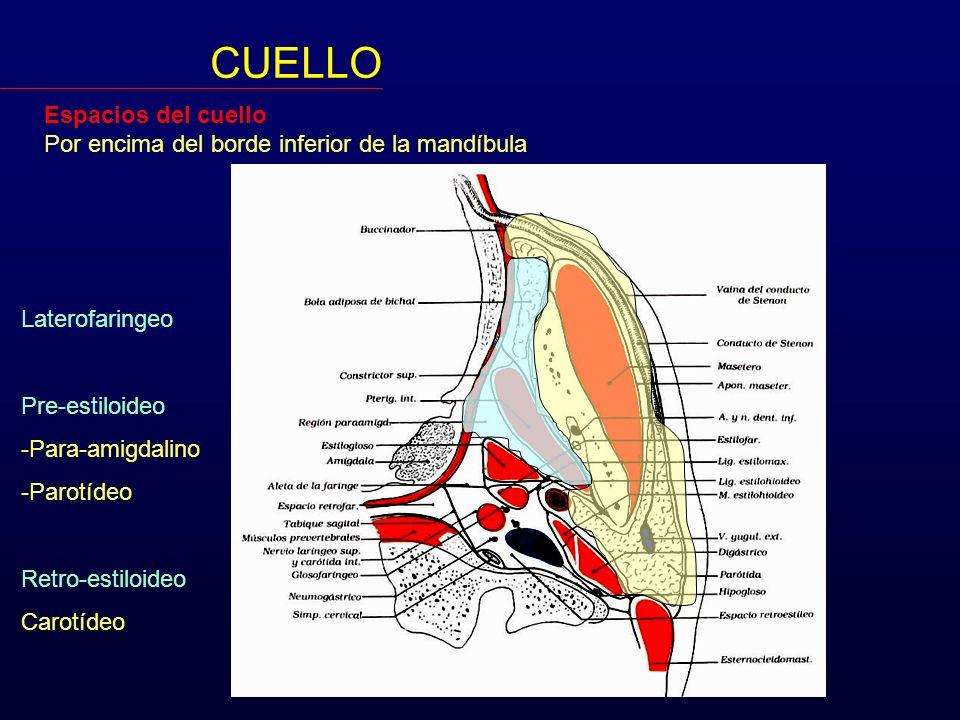 Espacios del cuello Por encima del borde inferior de la mandíbula CUELLO Laterofaringeo Pre-estiloideo -Para-amigdalino -Parotídeo Retro-estiloideo Ca