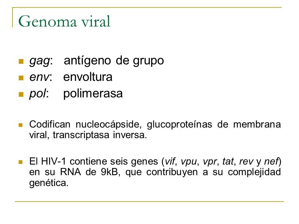 Genoma viral gag: antígeno de grupo env: envoltura pol: polimerasa Codifican nucleocápside, glucoproteínas de membrana viral, transcriptasa inversa. E