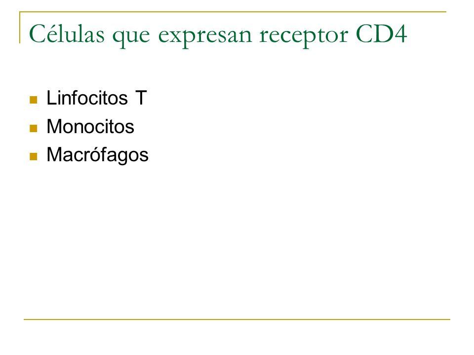 Células que expresan receptor CD4 Linfocitos T Monocitos Macrófagos
