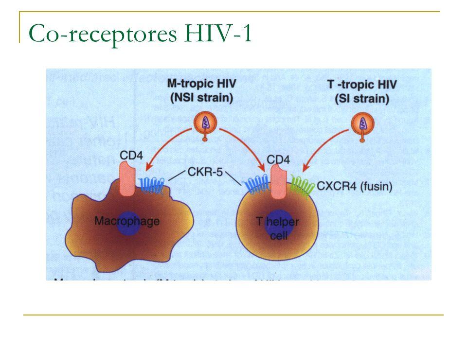 Co-receptores HIV-1