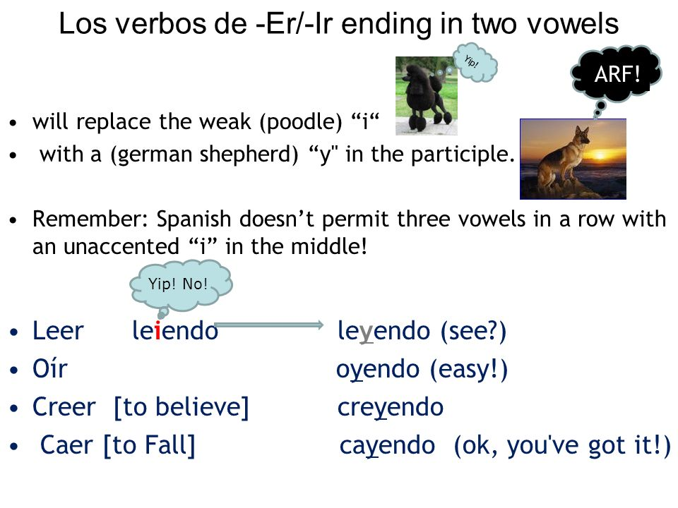 Los verbos de -Er/-Ir ending in two vowels will replace the weak (poodle) i with a (german shepherd) y in the participle.
