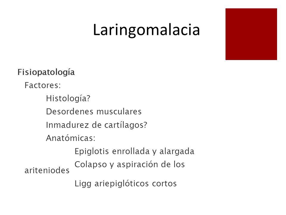 Fisiopatología Factores: Histología? Desordenes musculares Inmadurez de cartílagos? Anatómicas: Epiglotis enrollada y alargada Colapso y aspiración de