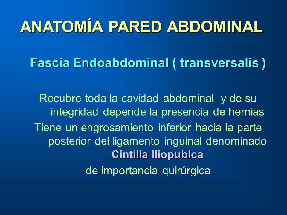 Fascia Endoabdominal ( transversalis ) Recubre toda la cavidad abdominal y de su integridad depende la presencia de hernias Cintilla Iliopubica Tiene