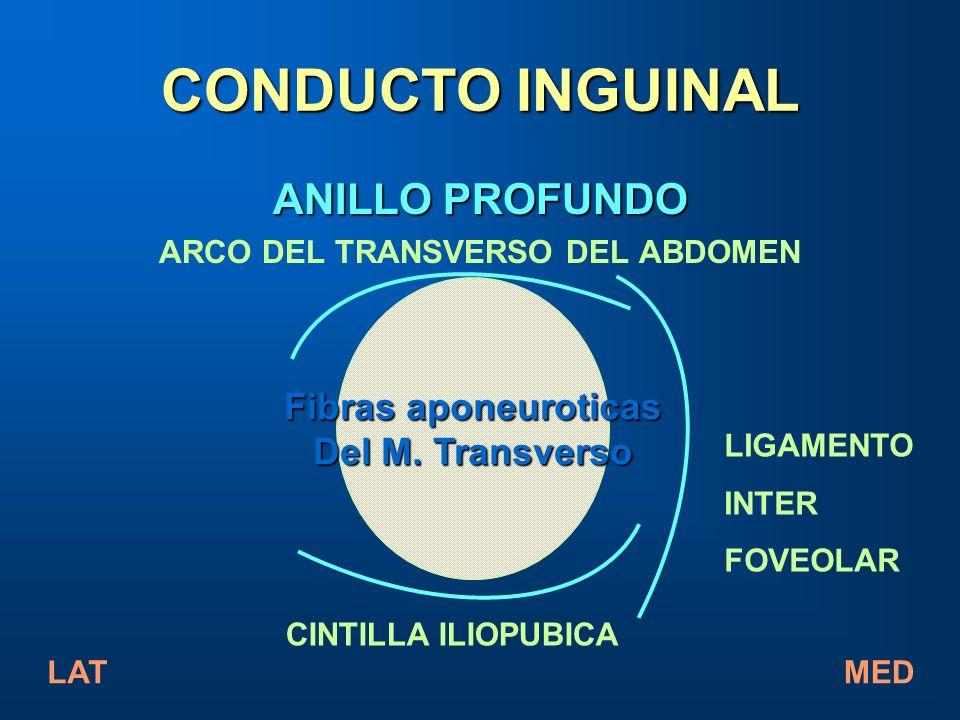 ANILLO PROFUNDO ARCO DEL TRANSVERSO DEL ABDOMEN Fibras aponeuroticas Del M. Transverso CONDUCTO INGUINAL LIGAMENTO INTER FOVEOLAR CINTILLA ILIOPUBICA