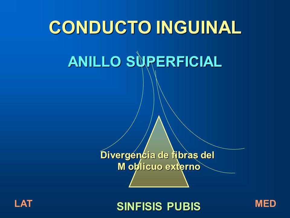 CONDUCTO INGUINAL ANILLO SUPERFICIAL Divergencia de fibras del M oblicuo externo SINFISIS PUBIS LATMED