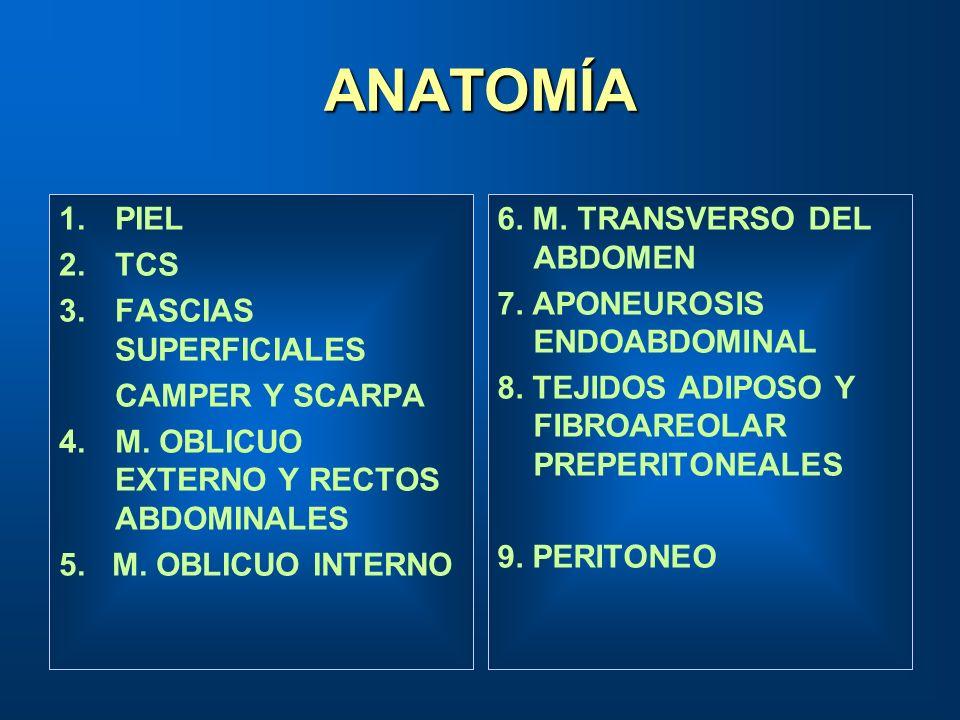 ANATOMÍA 1.PIEL 2.TCS 3.FASCIAS SUPERFICIALES CAMPER Y SCARPA 4.M. OBLICUO EXTERNO Y RECTOS ABDOMINALES 5. M. OBLICUO INTERNO 6. M. TRANSVERSO DEL ABD