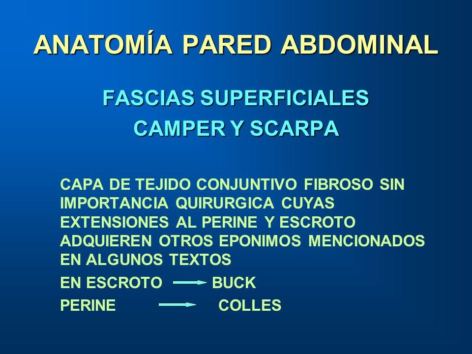 ANATOMÍA PARED ABDOMINAL FASCIAS SUPERFICIALES CAMPER Y SCARPA CAPA DE TEJIDO CONJUNTIVO FIBROSO SIN IMPORTANCIA QUIRURGICA CUYAS EXTENSIONES AL PERIN