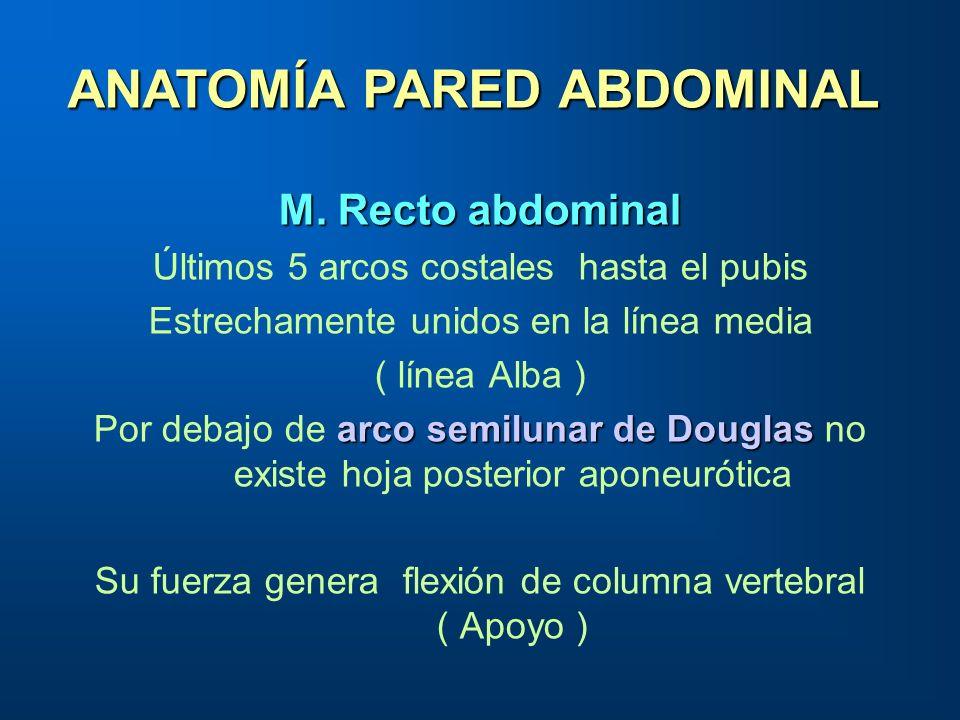 M. Recto abdominal Últimos 5 arcos costales hasta el pubis Estrechamente unidos en la línea media ( línea Alba ) arco semilunar de Douglas Por debajo
