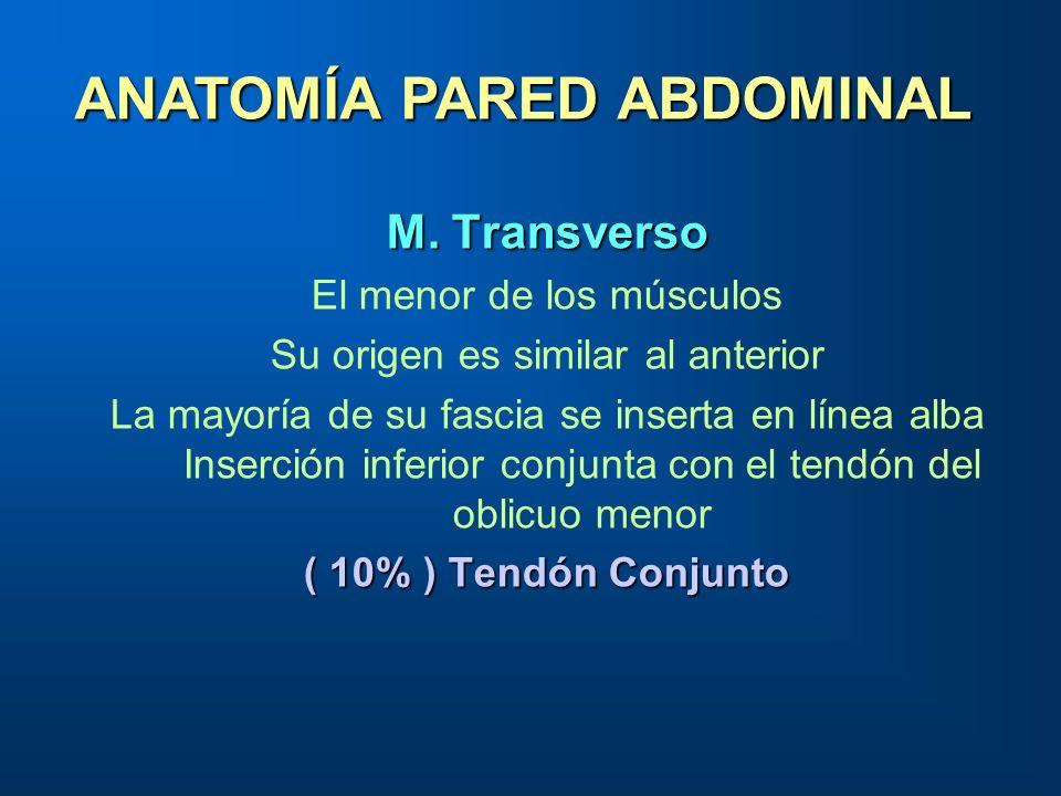 M. Transverso El menor de los músculos Su origen es similar al anterior La mayoría de su fascia se inserta en línea alba Inserción inferior conjunta c