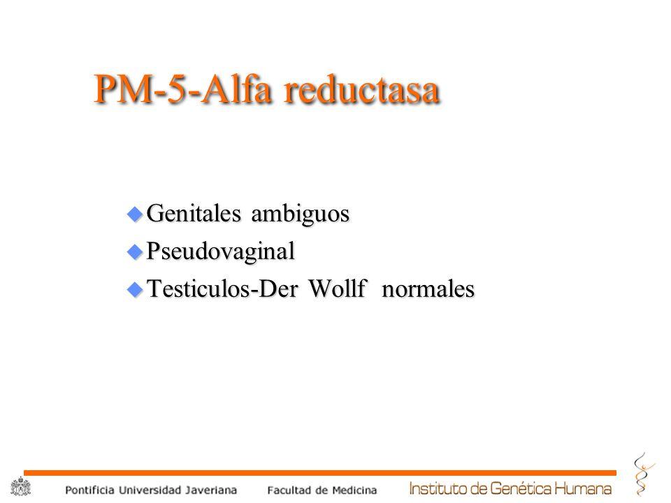 ® PM-5-Alfa reductasa u Genitales ambiguos u Pseudovaginal u Testiculos-Der Wollf normales