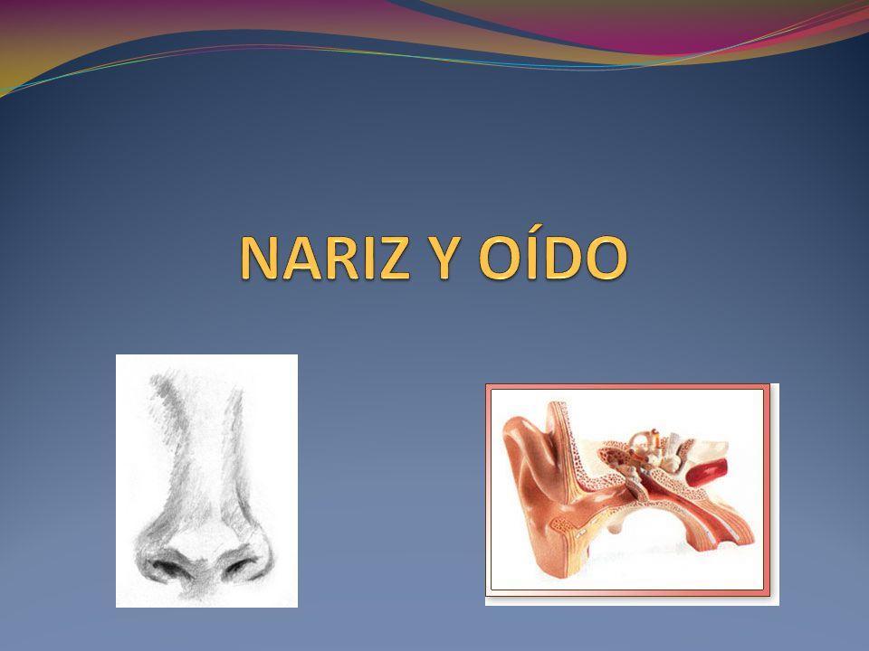 Diagnóstico Imagenológico Radiografía AP/PA y lateral de cuello.