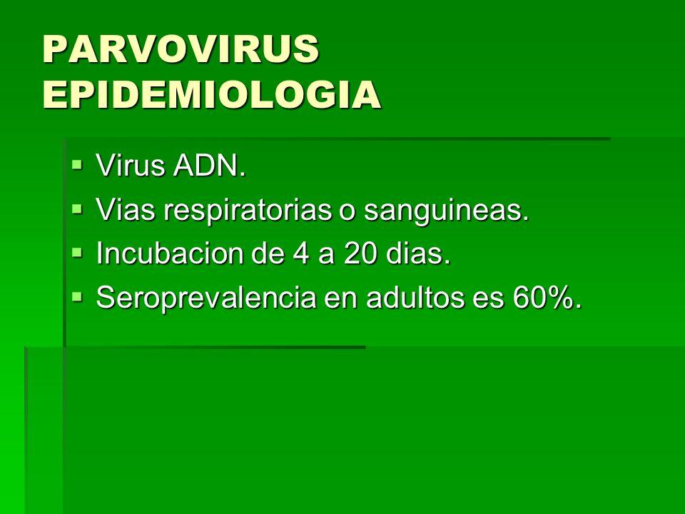 PARVOVIRUS EPIDEMIOLOGIA Virus ADN. Virus ADN. Vias respiratorias o sanguineas. Vias respiratorias o sanguineas. Incubacion de 4 a 20 dias. Incubacion