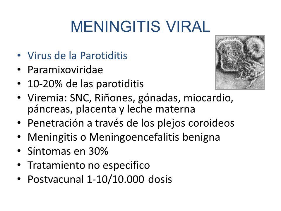 MENINGITIS VIRAL Virus de la Parotiditis Paramixoviridae 10-20% de las parotiditis Viremia: SNC, Riñones, gónadas, miocardio, páncreas, placenta y lec